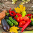 Autumn vegetables — Stock Photo