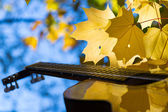 Classical guitar and autumn leafs — Foto Stock