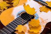 Classical guitar springs and foliage — Stock Photo