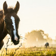 Horses on morning medow - Stock Photo