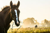 Horses on morning medow — Stock Photo