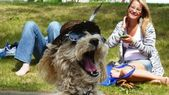Yawning Dog Waits in Line at U2 Concert in Edmonton — Stock Photo