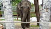 Elephant at Calgary Zoo, Alberta, Canada — Photo