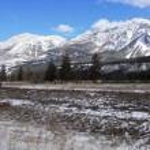 Elk grazing near Jasper — Stock Photo