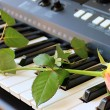 Rose on a synthesizer — Stock Photo