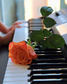 Rose on the keys — Stock Photo