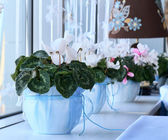 Number of flower pots on the windowsill — Stock Photo