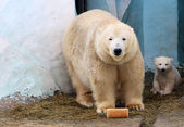 Bear and her cub with a loaf of bread — Stock Photo