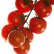 Royalty-Free Stock Photo: Cherry tomatoes on a branch