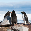 Gentoo penguins near the mountain — Stock fotografie
