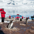 Tourists taking shots of gentoo penguins — Stock Photo