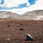 Field of stones in Deception island, Antarctica — Stock Photo