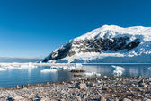 Gentoo penguins near the mountain — Stok fotoğraf