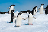 Penguins in the Antarctic sea — Stockfoto
