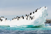 Pinguins na neve — Fotografia Stock