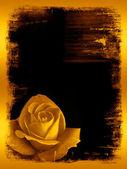 Rose golden grunge — Stock Photo