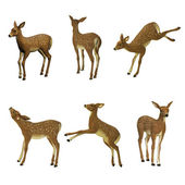Fawn set, isolated on the white background — Stock Photo