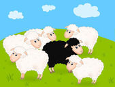 Black sheep — Stock Photo