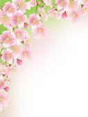 Sakura — Fotografia Stock