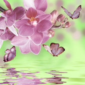 Floral background with orchid and butterflies — Stock Photo