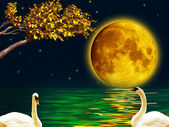 Two swans in the full moon night — Stock Photo