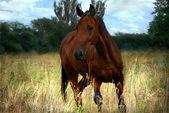 Koně a pole — Stock fotografie