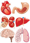 Internal organs set — Stockvector