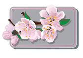 Cherry blossoms card — Stock Vector