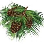 Cedar branch with cones — Stock Photo #25896151
