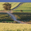 Farmlands in the Overberg, South Africa — Stock Photo