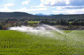 Irrigation, farming — Stockfoto
