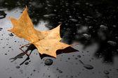 黒いガラスの背景に秋の葉 — ストック写真