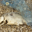Stock Photo: Dead Rotten Fish Pollution
