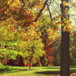 Fall Trees in Park — Stock Photo #13872455