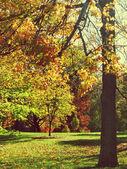 Na podzim stromy v parku — Stock fotografie