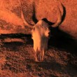 Cow Skull with Fire Reflection — Stock Video #16340471