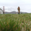 Girl with a Puppy  Golden Gate Bridge - Stock Photo