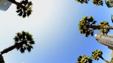 California Tropical Palm Trees Driving — Stock Video