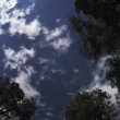 Clouds Trees Time Lapse - Stock Photo