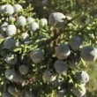 Blueberries — Stock Video