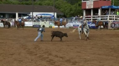 Rodeo Cowboys - Calf Roping in Slow Motion — Stock Video