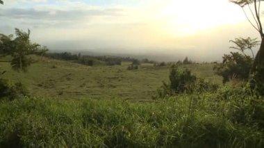 Ovelhas durante o pôr do sol — Vídeo Stock