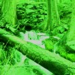Night Vision Forest - Stock Photo