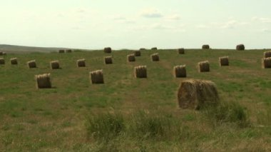 Hay Bales in Field. — Stock Video