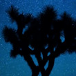 Star Lapse of Joshua Tree — Stock Video