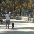 Time Lapse of Miami Beach Park — Stock Video