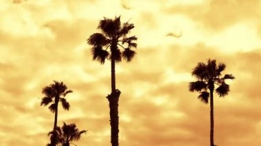 LA Palm Trees - Time Lapse — Stock Video