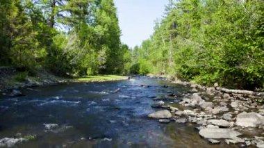 Strumień lasu w yosemite — Wideo stockowe