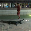 Alligators at Wildlife Zoo Thailand — Stock Video