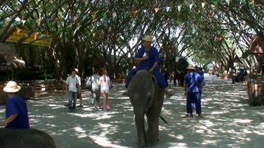Sloni na wildlife zoo thajsko — Stock video